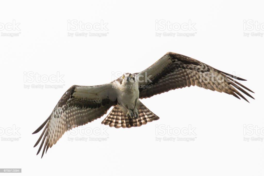 Flying Head On photo libre de droits