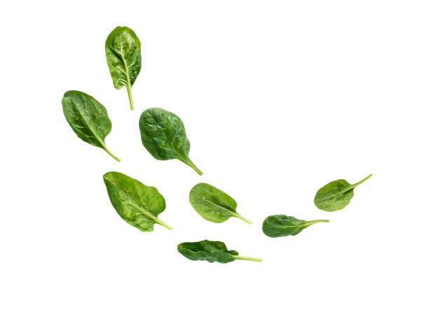 flying heap of green spinach leaves - szpinak zdjęcia i obrazy z banku zdjęć