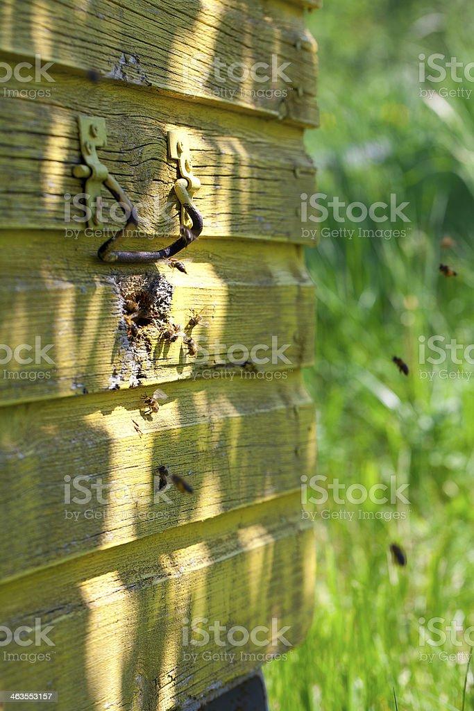 flying honey bees royalty-free stock photo