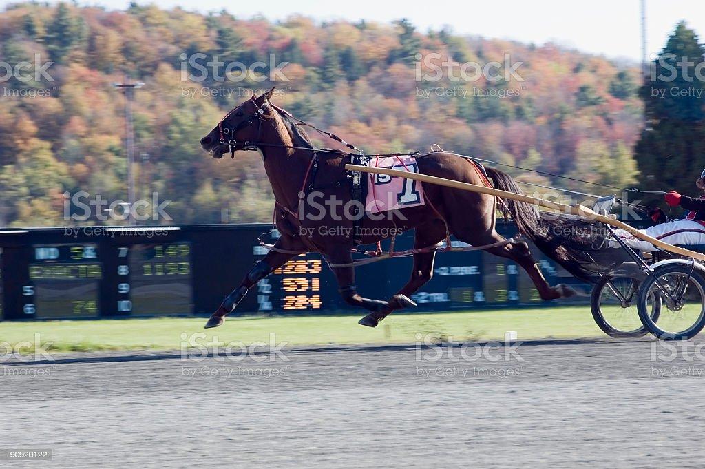 flying horse 1 royalty-free stock photo