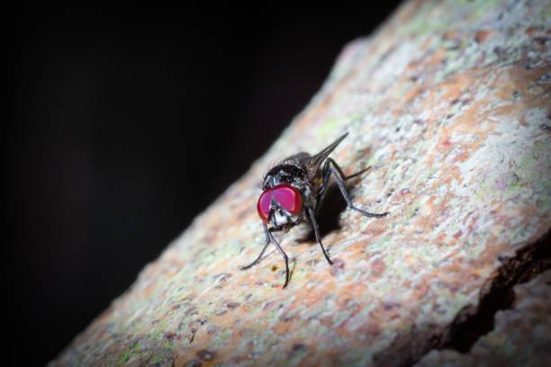 Fliegende Insektenaugen – Foto