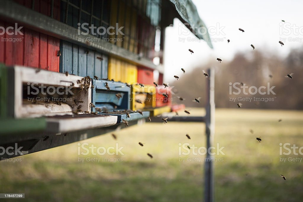 Flying into the hive royalty-free stock photo