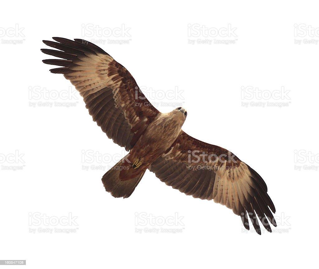 flying kite royalty-free stock photo