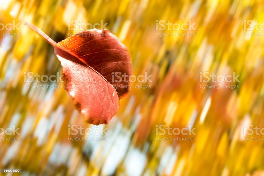 another panning shot of a falling leaf.