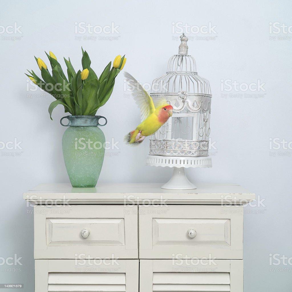 Flying Lovebird stock photo