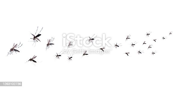 Flying mosquitoes isolated on white background