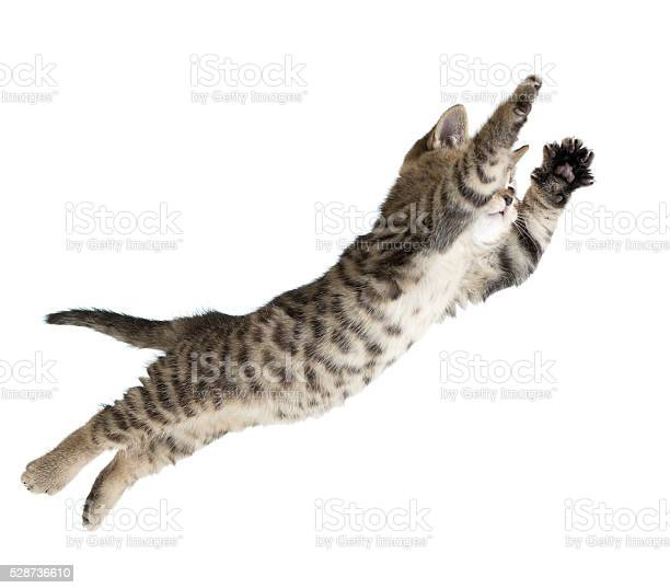 Flying or jumping kitten cat isolated picture id528736610?b=1&k=6&m=528736610&s=612x612&h=oyfaz ut1w2 ztvsvbpuhlxkm8t6fl6ataivjmqvehs=