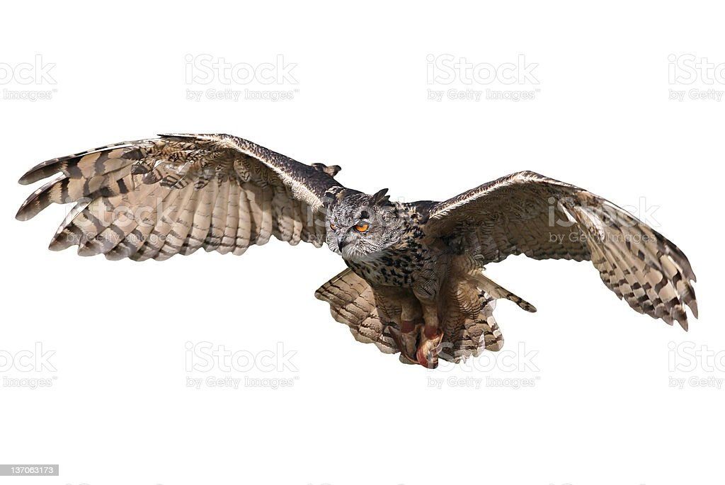 Flying owl isolated on white background stock photo