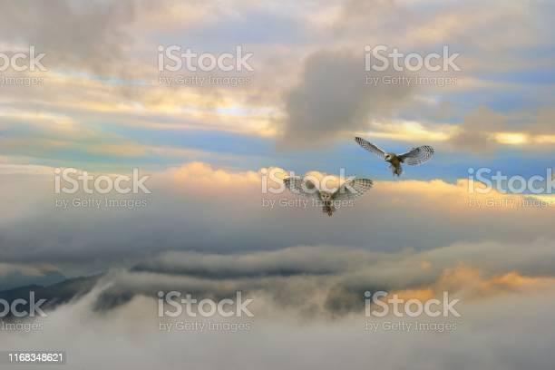 Flying owls picture id1168348621?b=1&k=6&m=1168348621&s=612x612&h= 2c4vvvgdow5pzxdnzycqlip7nvzoil8ghsprqljrge=