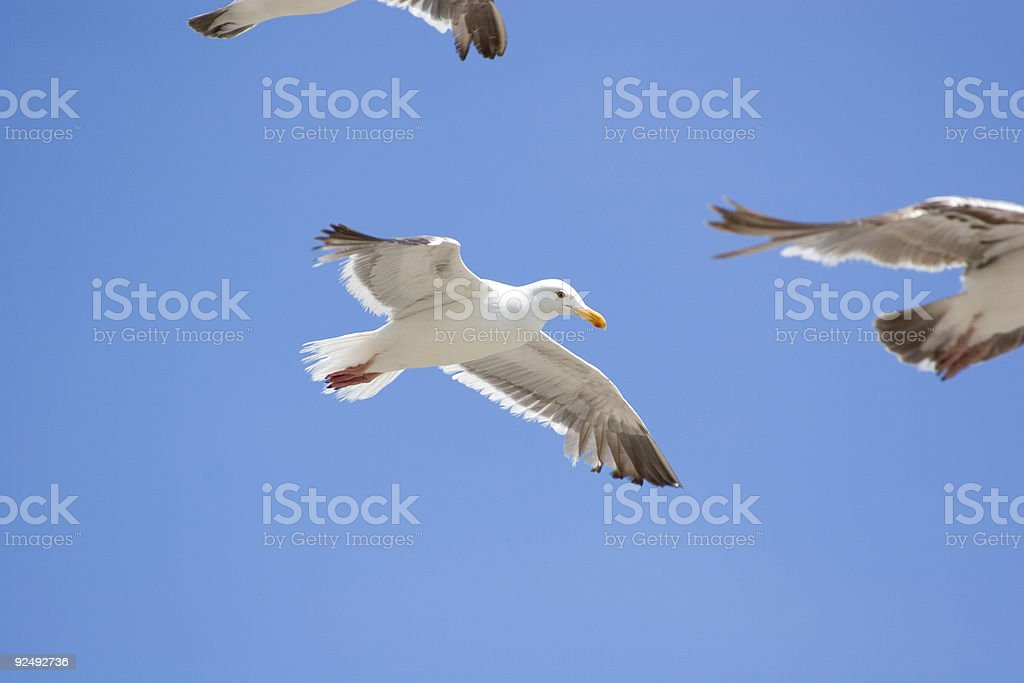 flying pack of birds royalty-free stock photo