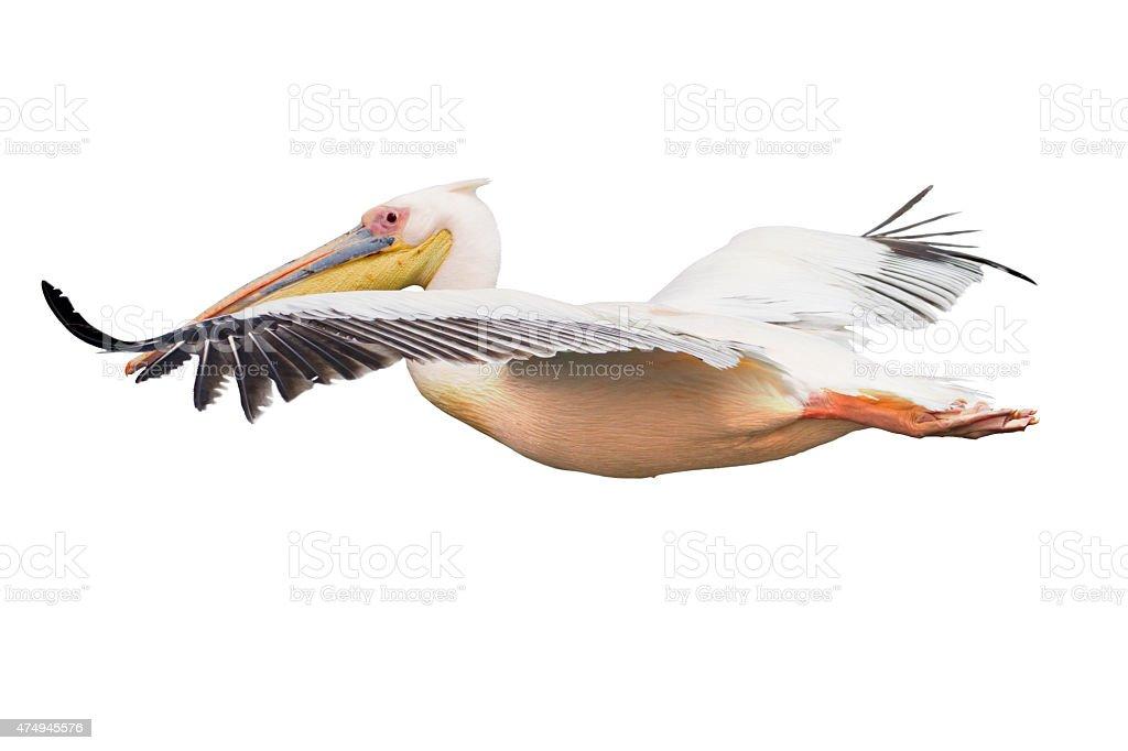 Fliegenden Pelikan Isoliert – Foto