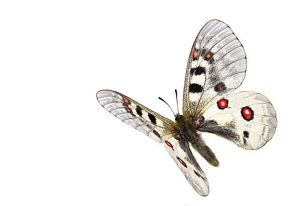 Flying phoebus picture id513048436?b=1&k=6&m=513048436&s=612x612&w=0&h=emi a9rbqsxvz2umbqnohwakbvkmwnpxjzvv1emvqfg=