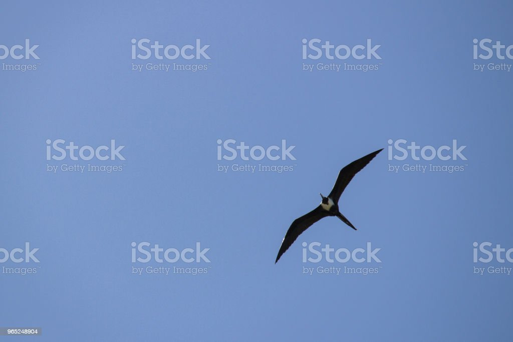 flying zbiór zdjęć royalty-free