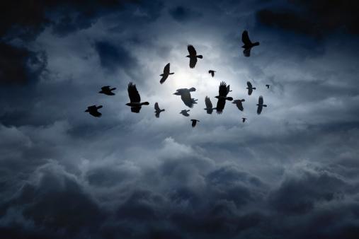 Flock of flying ravens, crows in dark moody sky