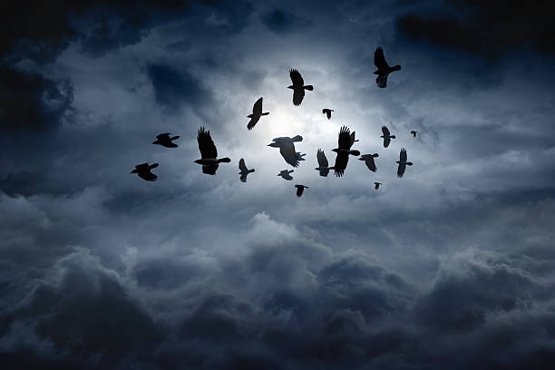 Flying ravens - foto de stock