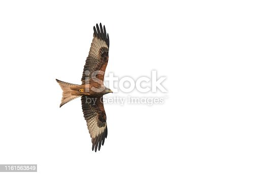 Flying red kite against a white background.