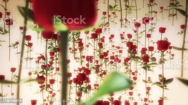 Flying roses valentines background picture id1190168514?b=1&k=6&m=1190168514&s=612x612&h=f39breemidiiansuiajeevu10dwpz2wo9yesilscb34=