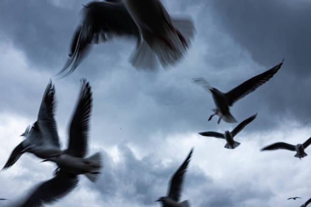 Fliegende Möwen – Foto