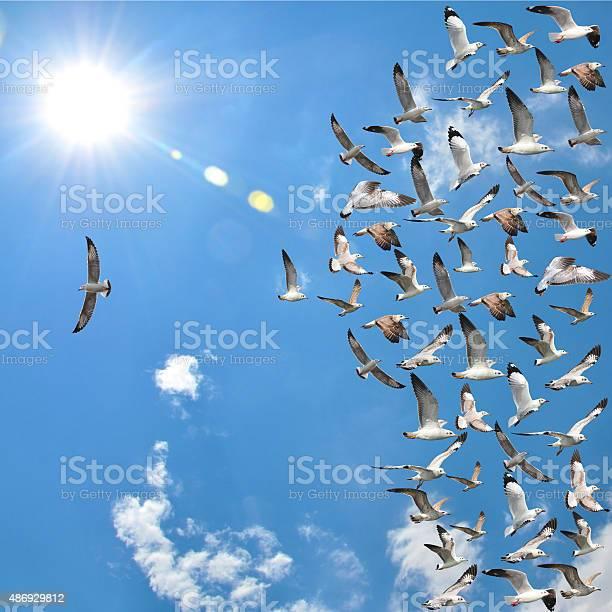 Flying seagull birds picture id486929812?b=1&k=6&m=486929812&s=612x612&h=rgbf4f1trcys9clmfuda1iw66owh9ianjtbifdkot w=