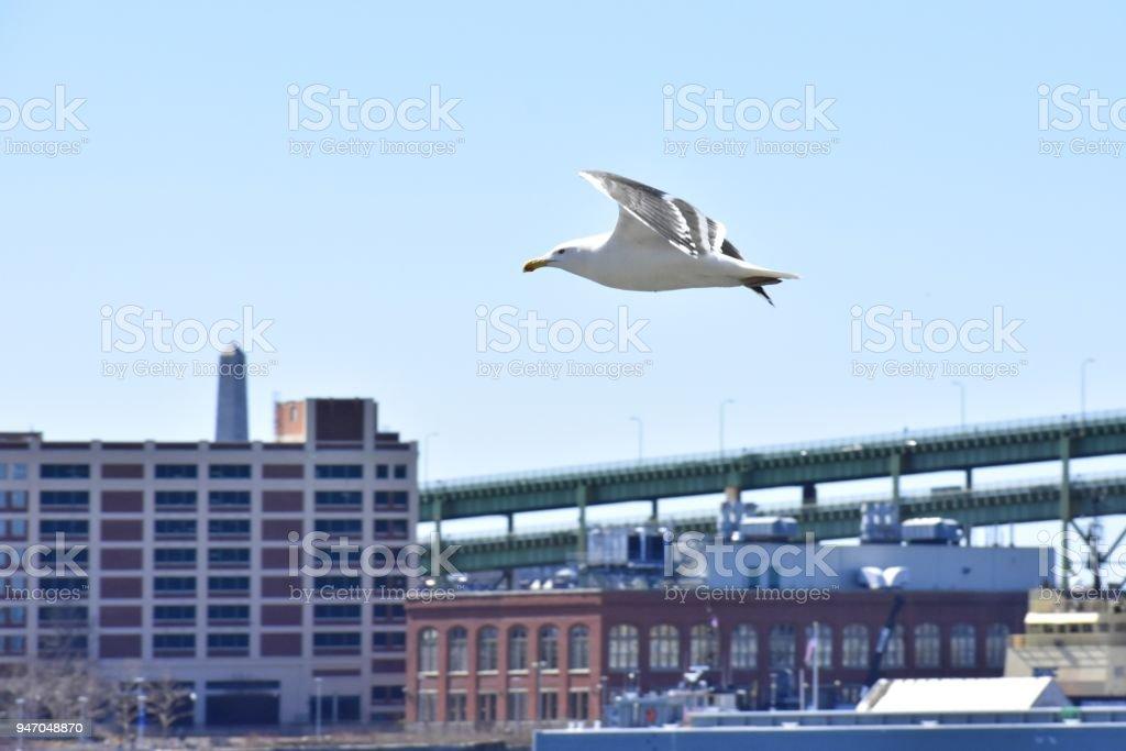 Flying Seagull, East Boston stock photo