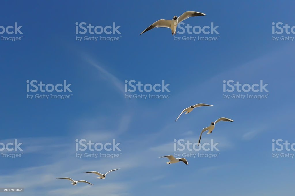 Flying Seagull Group stock photo