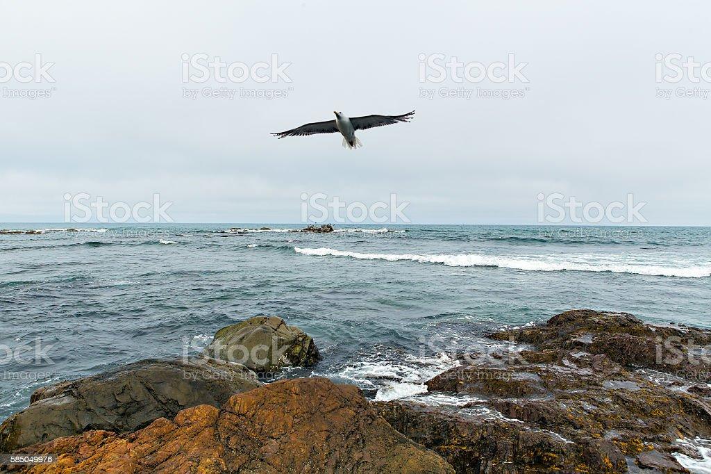 Flying seagull over okhotskoe sea – Foto