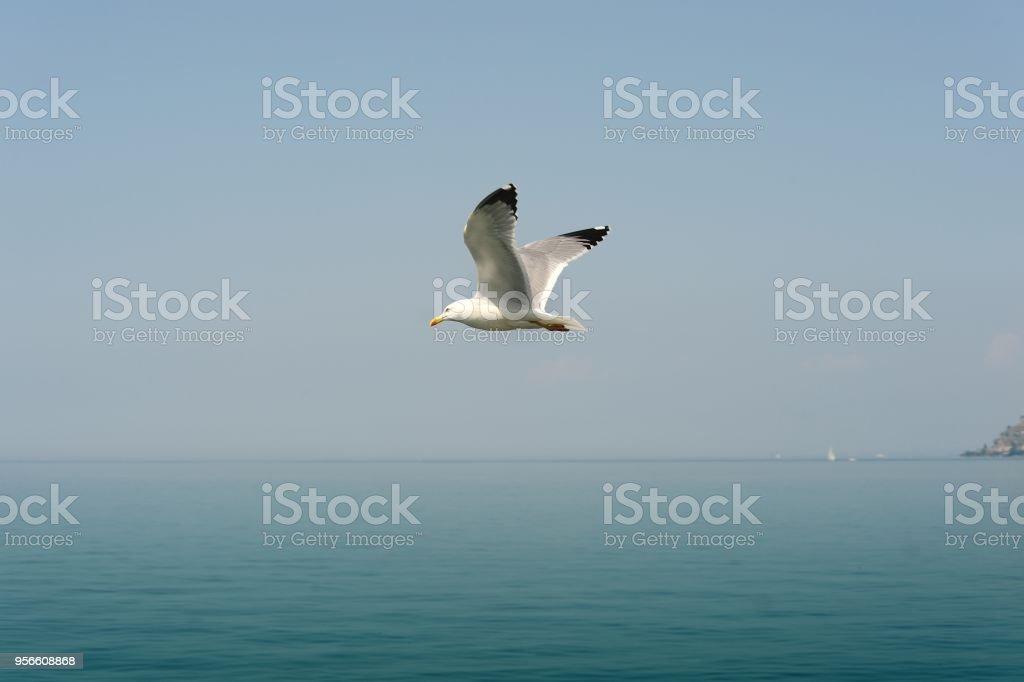 Fliegende Möwe über den Genfer See – Foto