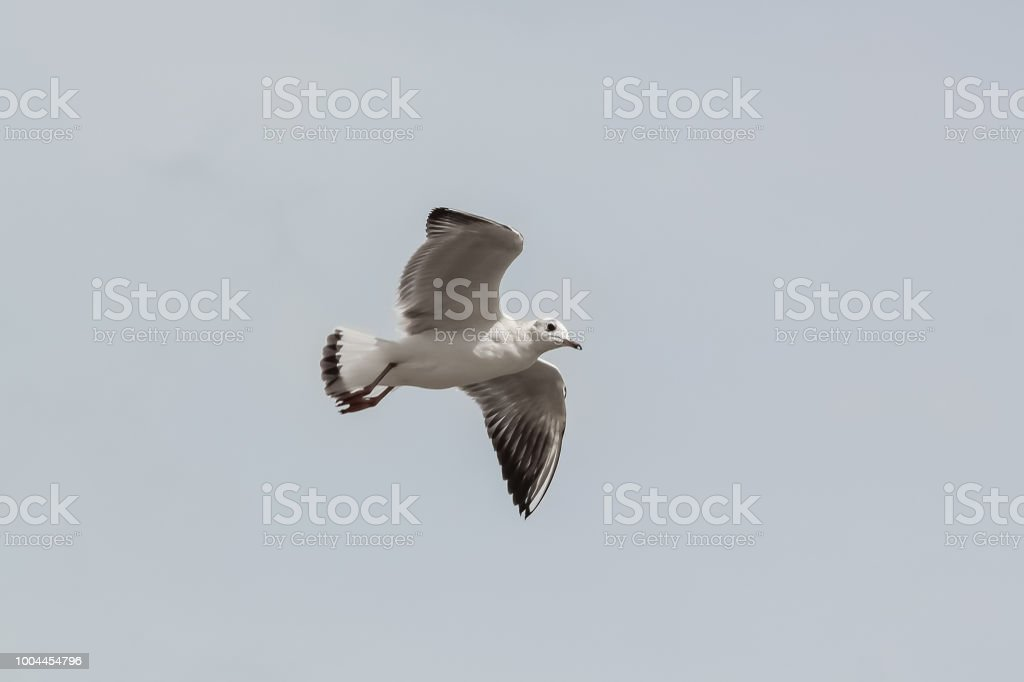 Photo of a cutout figure of seagull from underneath view.