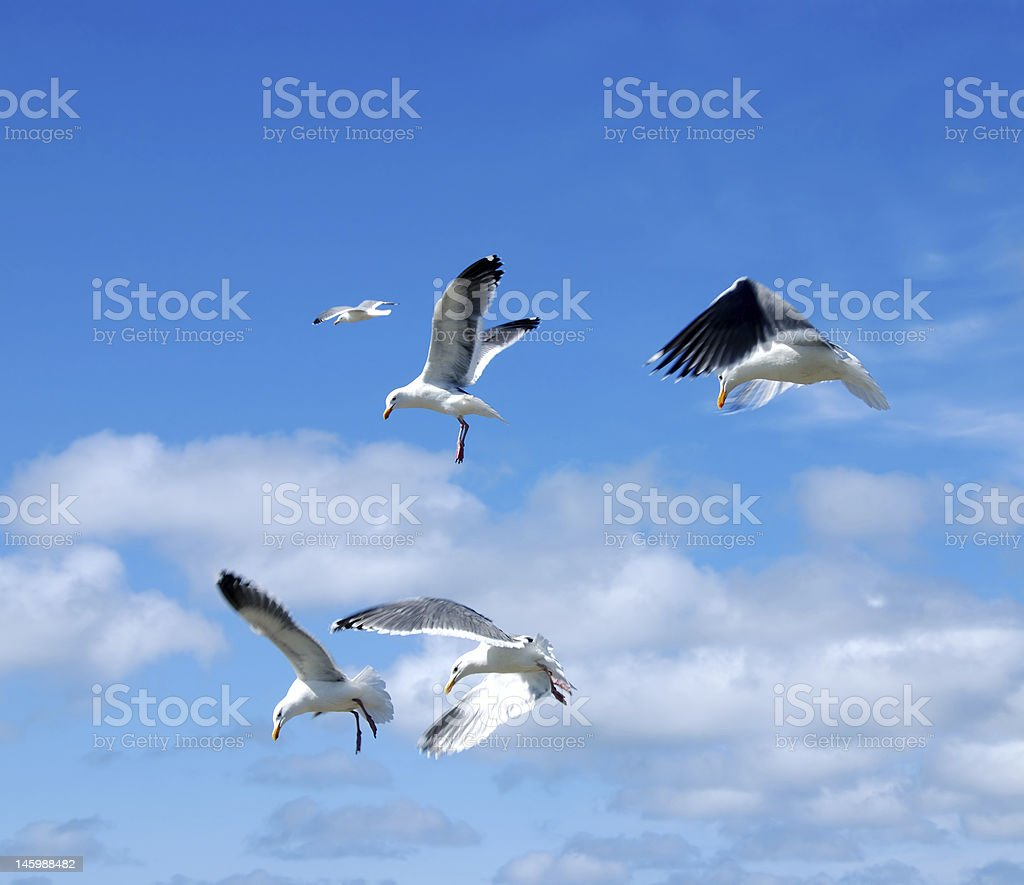 Flying Seagulls royalty-free stock photo