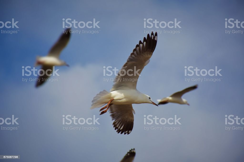 Flying seagulls photo libre de droits