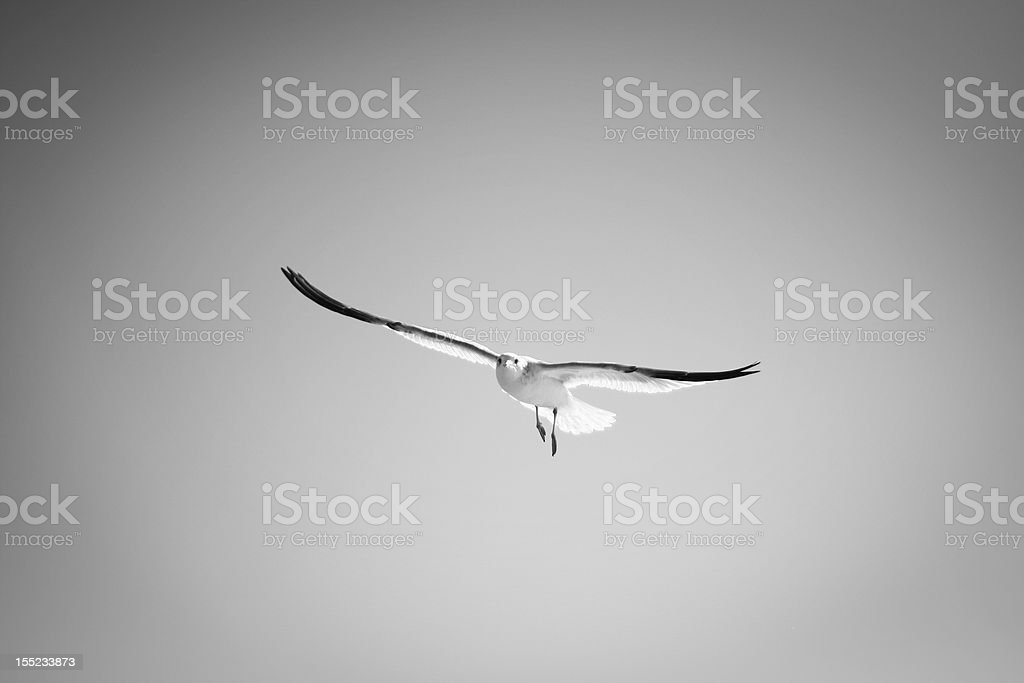 Flying Seegull royalty-free stock photo