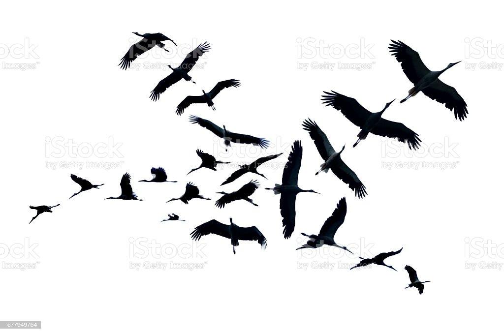 Flying Bocian puste - Zbiór zdjęć royalty-free (Afryka)