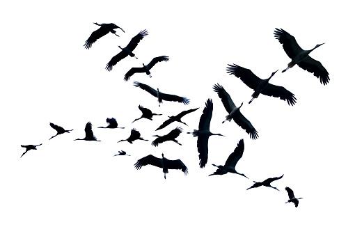 Flying Bocian Puste - zdjęcia stockowe i więcej obrazów Afryka