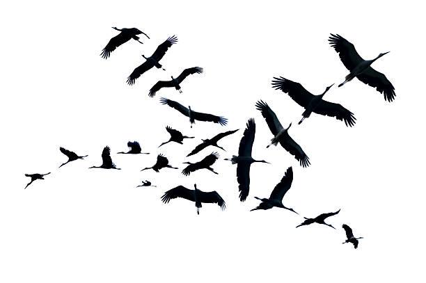 flying bocian puste - bocian zdjęcia i obrazy z banku zdjęć