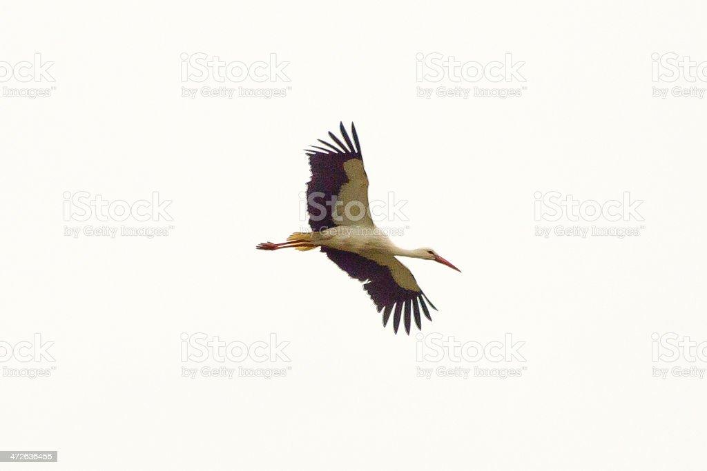 cegonha voando stock foto royalty free istock