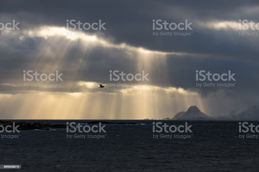Flying Through Sun Rays royalty-free stock photo