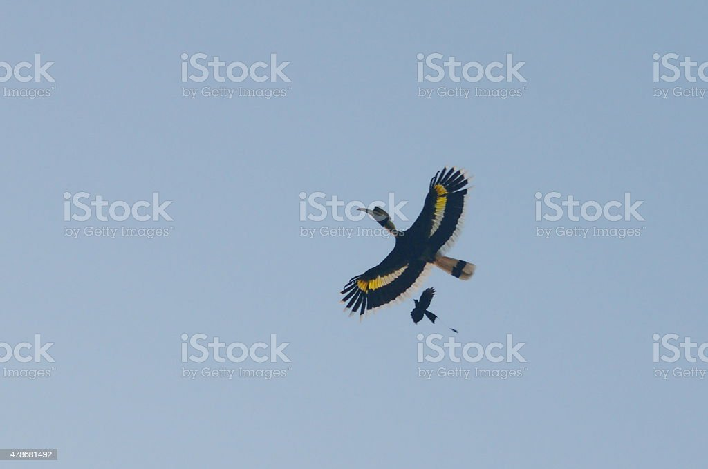 flying together stock photo
