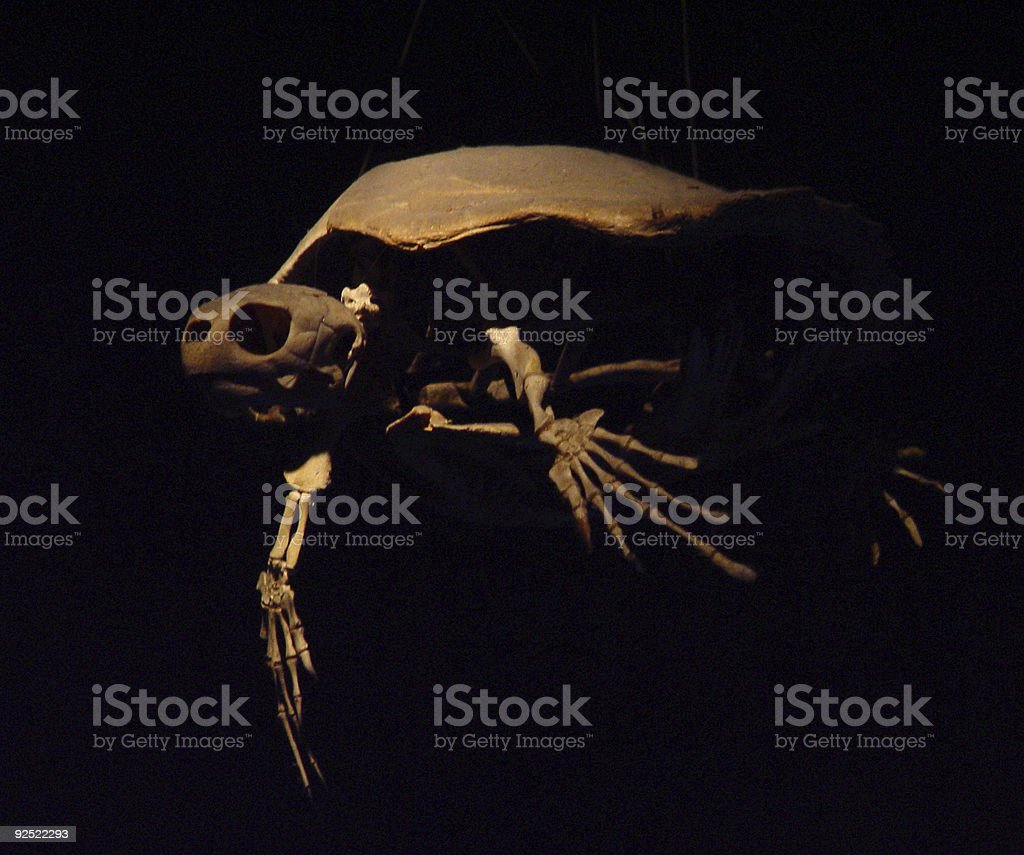 Flying Turtle Ghost royalty-free stock photo