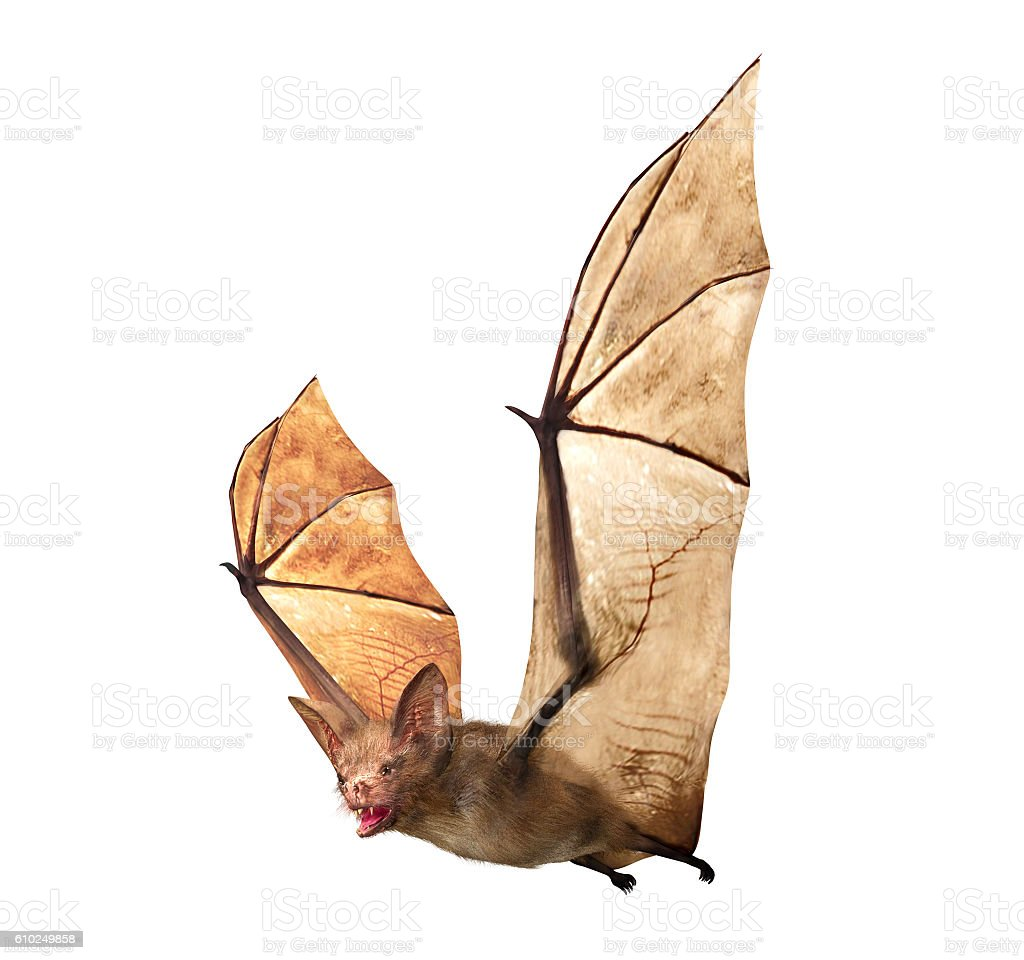 Flying Vampire bat isolated on white background - foto de stock