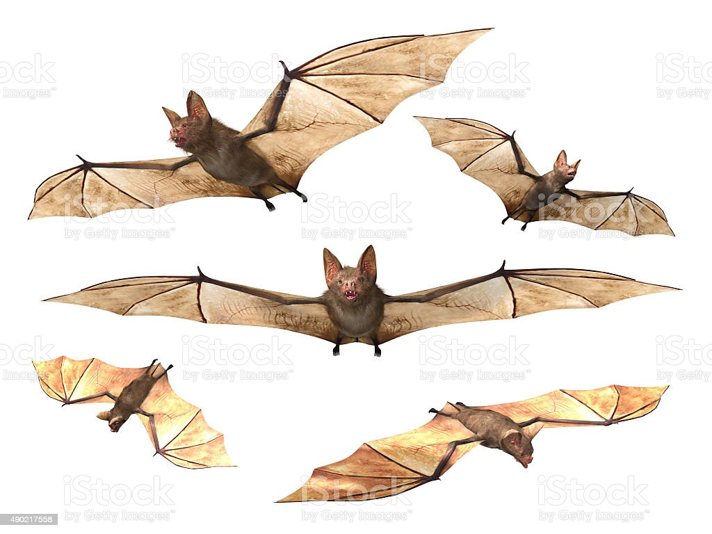 Flying Vampire bats stock photo