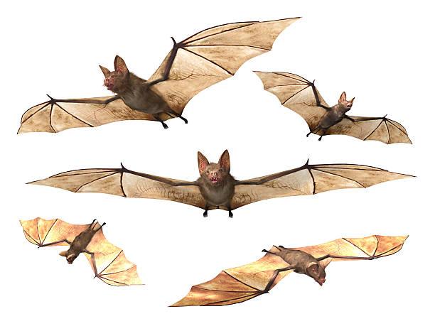 Flying Vampire bats stock photo