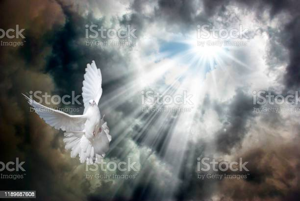Photo of Flying white dove in front of stormy sky