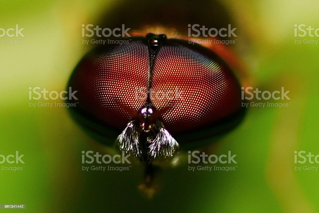 Fly's compound eyes closed up, green background (horizontal) stock photo