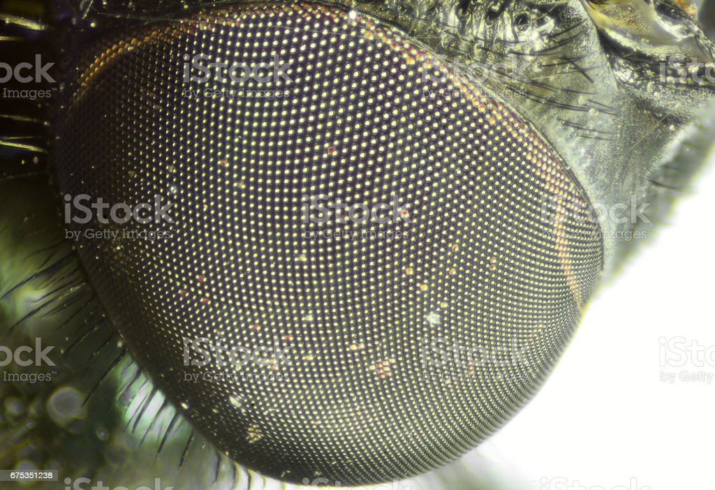 Fly's eye close-up view. Microscopic world. stock photo