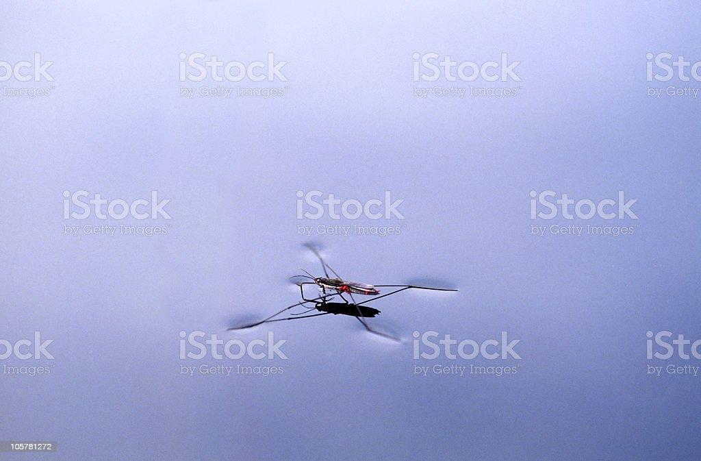flyweight stock photo