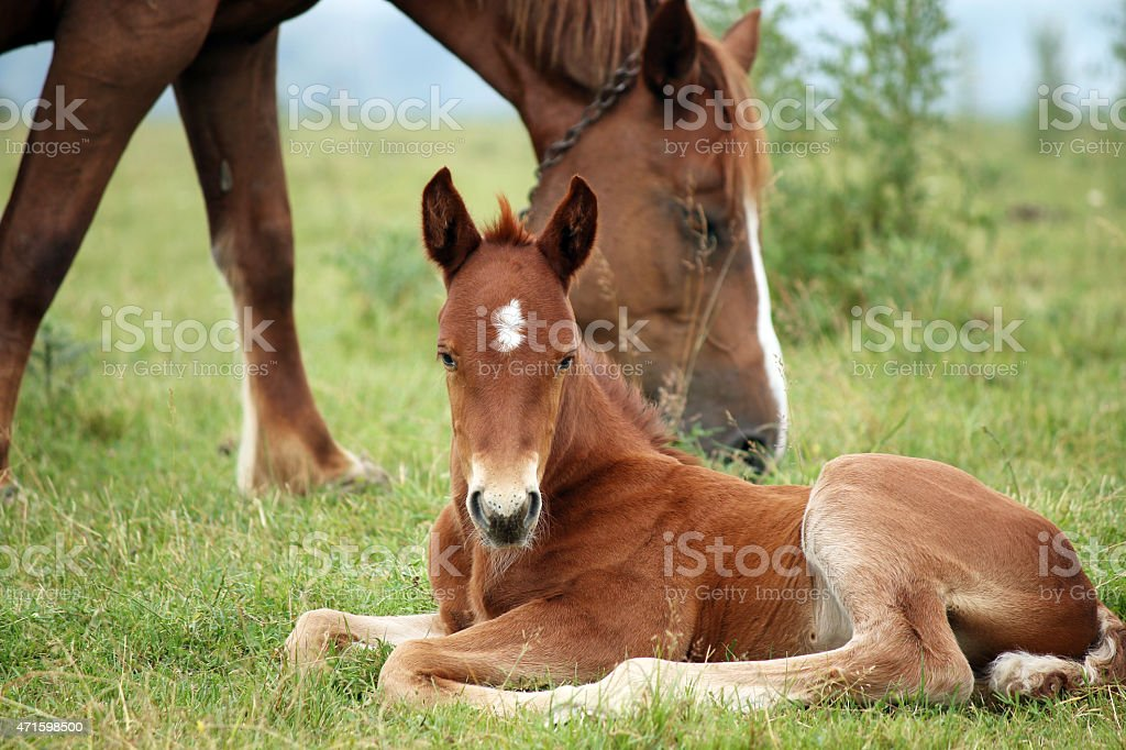 foal and horse on pasture stock photo