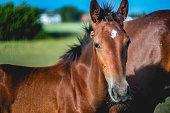 chevaux, ferme équestre, enclos