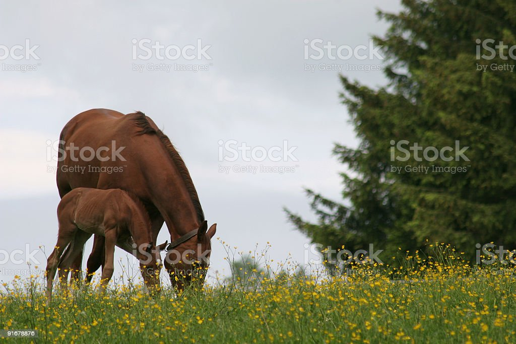 foal and mother royalty-free stock photo