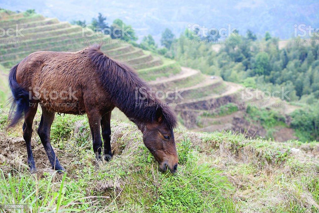 foal nibbling grass stock photo