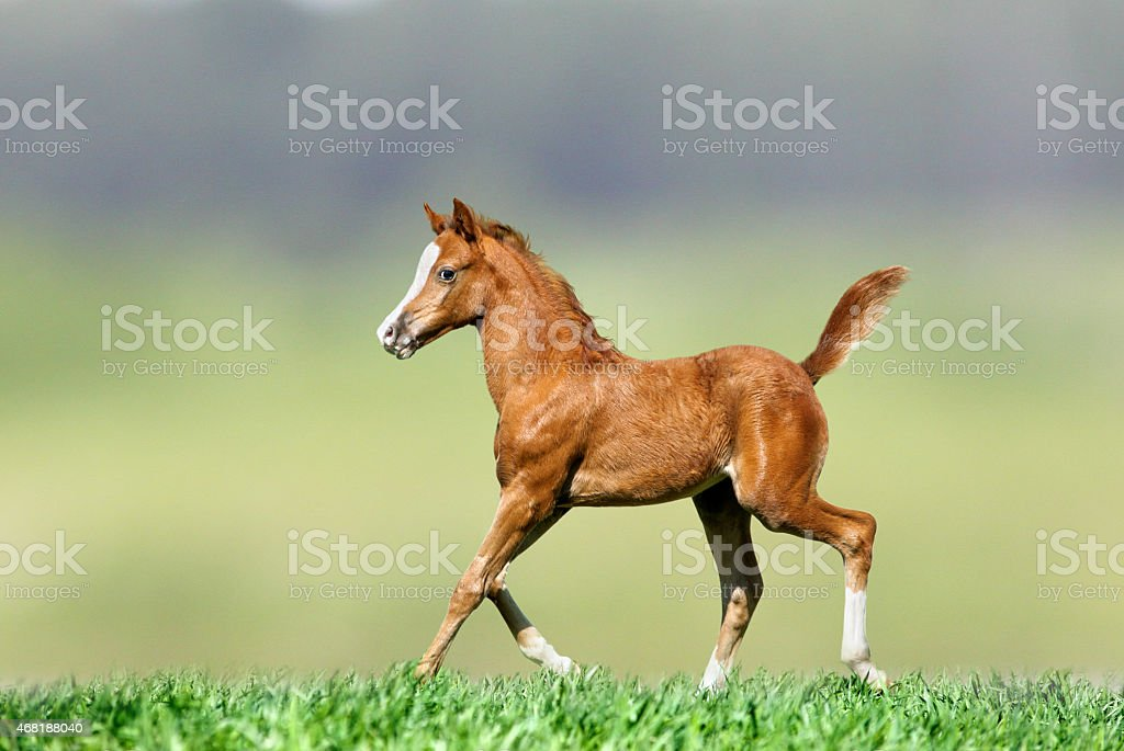 foal on nature stock photo